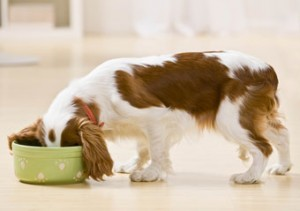 hondenvoer online bestellen